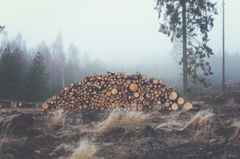 Some logs that you can burn down.